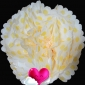 "16"" Yellow Dot Tissue Paper Pom Poms Ball -(4 pieces)"