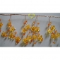 "42"" Orange Crystal star cluster wired Garland"